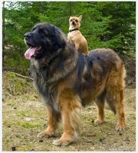http://www.digitalbusstop.com/animals-riding-on-other-animals/